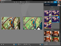 Bild von InPixio Photo Editor Home [PC-Software]